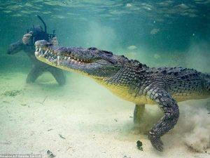 Chiêm bao thấy cá sấu nên đánh số đề con bao nhiêu?