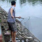 Mơ thấy ăn trộm cá là điềm báo gì? Đánh con gì để trúng lớn?