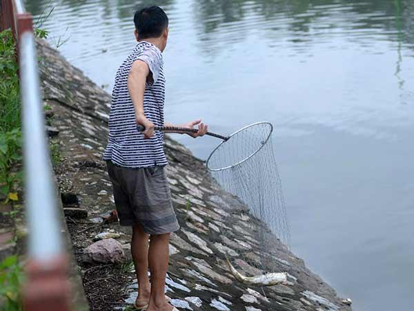 Chiêm bao thấy ăn trộm cá nên đánh con gì?