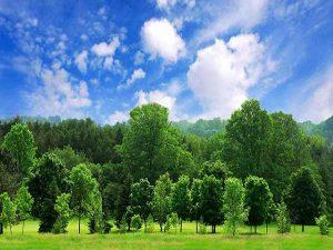 Mơ thấy cây là điềm báo lành hay dữ?