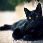 Nằm mơ thấy mèo đen đánh con gì? Giải mã ý nghĩa