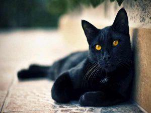 Mơ thấy mèo đen đánh con gì trúng lớn