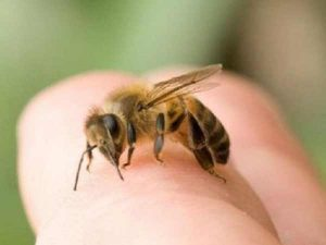 Chiêm bao thấy ong đốt đánh con gì?