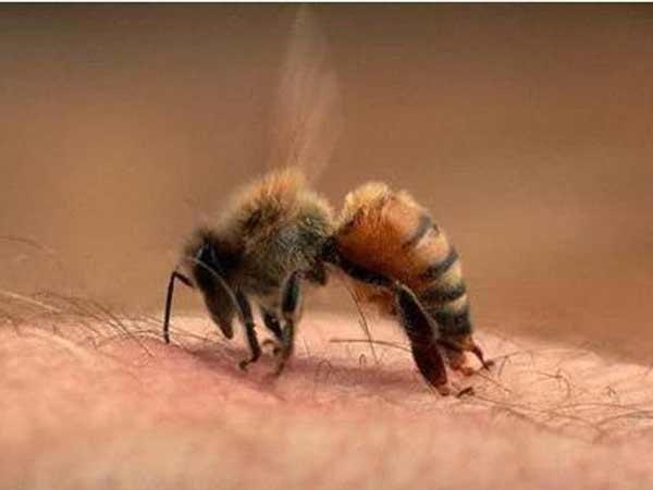 Mơ thấy ong đốt là điềm báo gì?