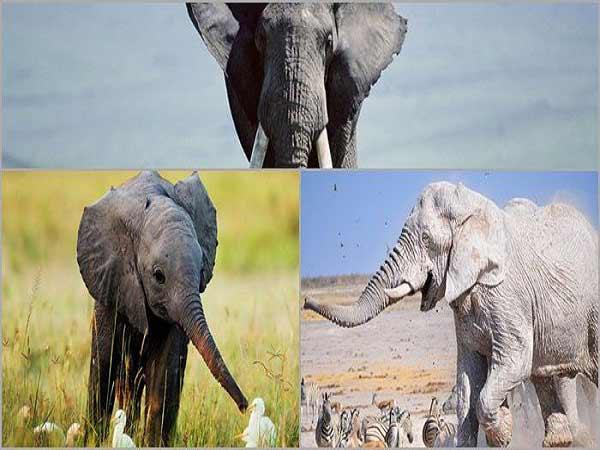 Mơ thấy voi đánh con gì trúng lớn?