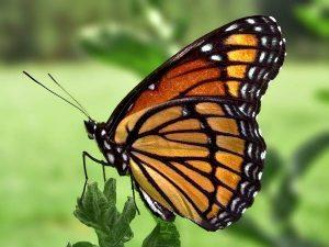 Mơ thấy bướm đánh con gì trúng lớn và đem lại nhiều may mắn