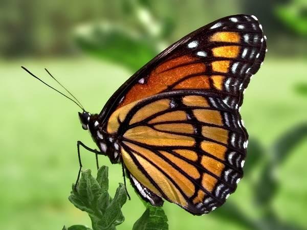 Nằm mơ thấy bướm đánh con gì trúng lớn? Ý nghĩa của giấc mơ
