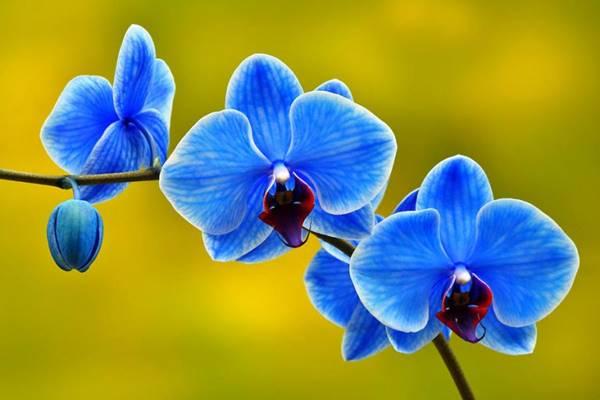 Nằm mơ thấy hoa lan báo hiệu con số gì nên đánh lô số mấy