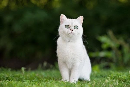 Chiêm bao thấy mèo trắng đánh con gì